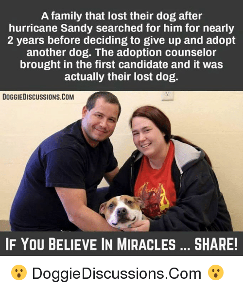 Memes, Lost, and 🤖: A family that lost their dog after  hurricane Sandy searched for him for nearly  2 years before deciding to give up and adopt  another dog. The adoption counselor  brought in the first candidate and it was  actually their lost dog.  DOGGIEDISCUSSIONS.COM  IF YOU BELIEVE IN MIRACLES SHARE! 😮 DoggieDiscussions.Com 😮