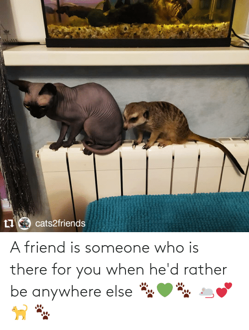 Rather Be: A friend is someone who is there for you when he'd rather be anywhere else 🐾💚🐾 🐁💕🐈 🐾