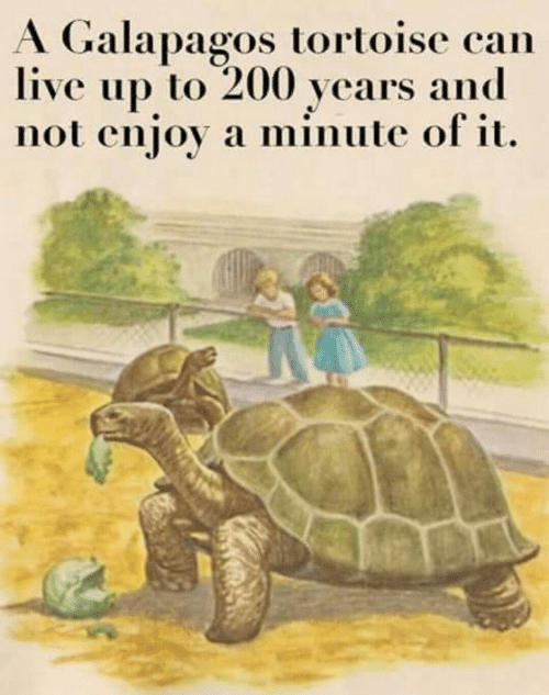 Live, Can, and Tortoise: A Galapagos tortoise can  live up to 200 years and  not enjoy a minute of it.