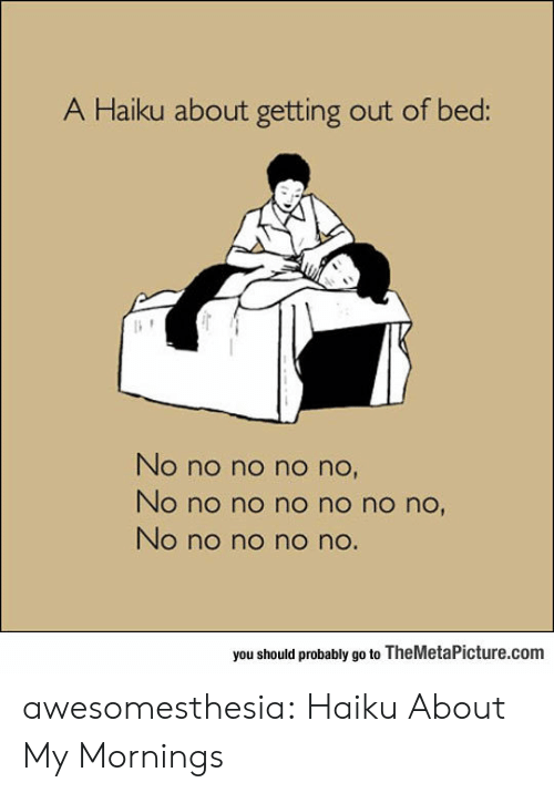Tumblr, Blog, and Haiku: A Haiku about getting out of bed:  No no no no no,  No no no no no no no,  No no no n no.  you should probably go to TheMetaPicture.com awesomesthesia:  Haiku About My Mornings