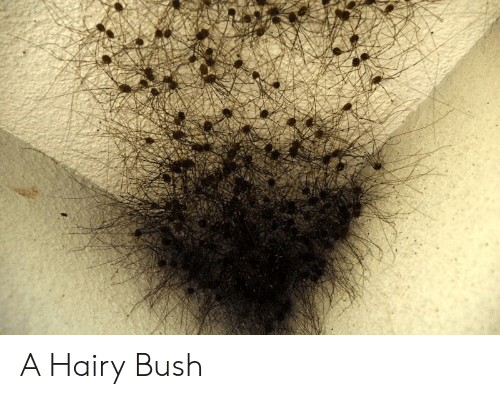 Bushes women hairy Is The