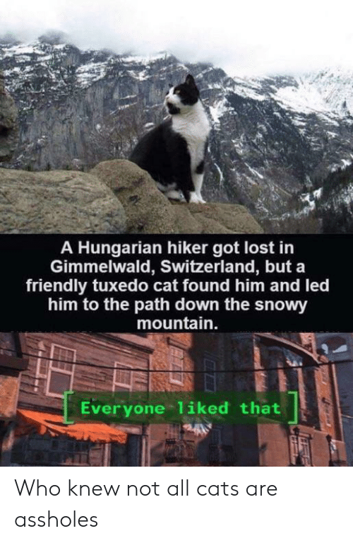 Switzerland: A Hungarian hiker got lost in  Gimmelwald, Switzerland, but a  friendly tuxedo cat found him and led  him to the path down the snowy  mountain.  Everyone 1iked that Who knew not all cats are assholes