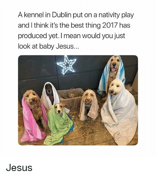 Jesus, Best, and Mean: A kennel in Dublin put on a nativity play  and l think it's the best thing 2017 has  produced yet. I mean would you just  look at baby Jesus... Jesus