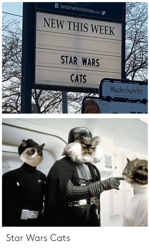 Mexican: A landmarkcinemas.com y  NEW THIS WEEK  STAR WARS  CATS  Mucho bumlto  trech mexican grill  004 Star Wars Cats