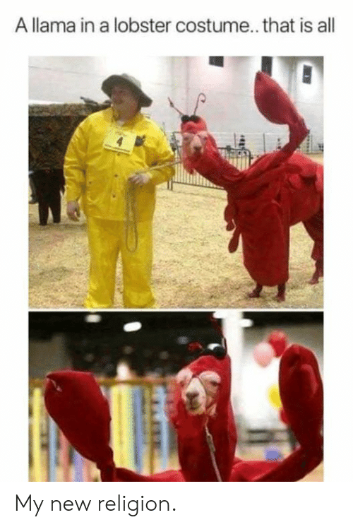 Dank, Religion, and 🤖: A llama in a lobster costume.. that is all My new religion.