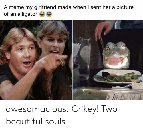 Alligator: A meme my girlfriend made when I sent her a picture  of an alligator awesomacious:  Crikey! Two beautiful souls