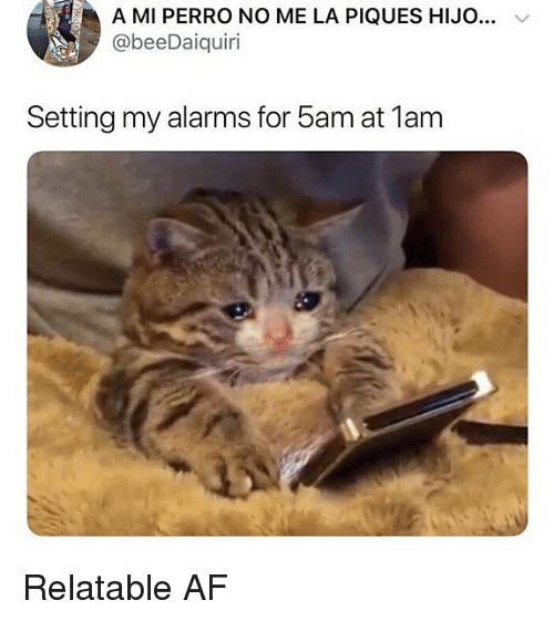 Af, Memes, and Relatable: A MI PERRO NO ME LA PIQUES HIJO.  @beeDaiquiri  Setting my alarms for 5am at 1am Relatable AF