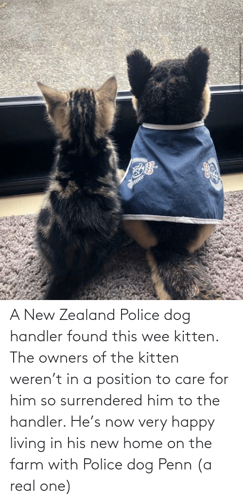 Owners: A New Zealand Police dog handler found this wee kitten. The owners of the kitten weren't in a position to care for him so surrendered him to the handler. He's now very happy living in his new home on the farm with Police dog Penn (a real one)