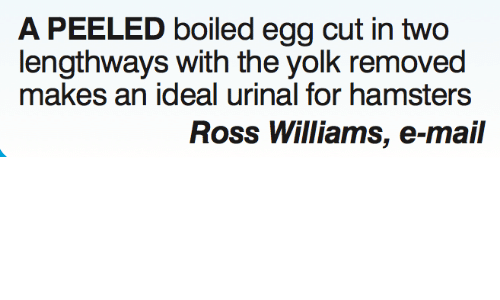 Yolked: A PEELED boiled egg cut in two  lengthways with the yolk removed  makes an ideal urinal for hamsters  Ross Williams, e-mail
