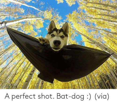 shot: A perfect shot. Bat-dog :) (via)