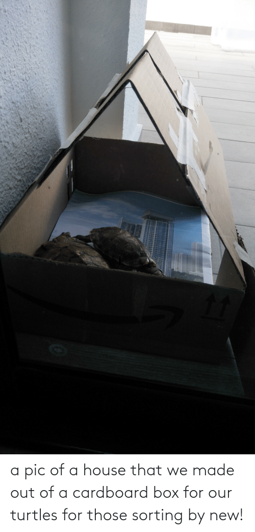 turtles: a pic of a house that we made out of a cardboard box for our turtles for those sorting by new!