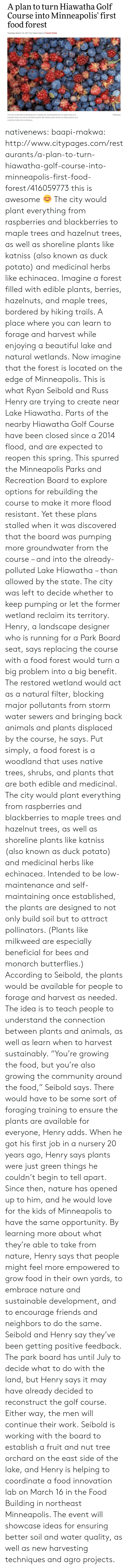 "woodland: A plan to turn Hiawatha Golif  Course into Minneapolis' first  food forest  Tuesday, March 14, 2017 by Taylor Danz in Food & Drink  Wikipedia  The city would plant everything from raspberries and blackberries to maple trees and  hazelnut trees, as well as shoreline plants like katniss (also known as duck potato) and  medicinal herbs like echinacea. nativenews: baapi-makwa:  http://www.citypages.com/restaurants/a-plan-to-turn-hiawatha-golf-course-into-minneapolis-first-food-forest/416059773  this is awesome 😊  The city would plant everything from raspberries and blackberries to maple trees and hazelnut trees, as well as shoreline plants like katniss (also known as duck potato) and medicinal herbs like echinacea.       Imagine a forest filled with edible plants, berries, hazelnuts, and maple trees, bordered by hiking trails. A place where you can learn to forage and harvest while enjoying a beautiful lake and natural wetlands.   Now imagine that the forest is located on the edge of Minneapolis.   This is what Ryan Seibold and Russ Henry are trying to create near Lake Hiawatha.   Parts of the nearby Hiawatha Golf Course have been closed since a 2014 flood, and are expected to reopen this spring. This spurred the Minneapolis Parks and Recreation Board to explore options for rebuilding the course to make it more flood resistant.   Yet these plans stalled when it was discovered that the board was pumping more groundwater from the course – and into the already-polluted Lake Hiawatha – than allowed by the state. The city was left to decide whether to keep pumping or let the former wetland reclaim its territory.   Henry, a landscape designer who is running for a Park Board seat, says replacing the course with a food forest would turn a big problem into a big benefit.   The restored wetland would act as a natural filter, blocking major pollutants from storm water sewers and bringing back animals and plants displaced by the course, he says.   Put simply, a food forest is a woodland that uses native trees, shrubs, and plants that are both edible and medicinal. The city would plant everything from raspberries and blackberries to maple trees and hazelnut trees, as well as shoreline plants like katniss (also known as duck potato) and medicinal herbs like echinacea.    Intended to be low-maintenance and self-maintaining once established, the plants are designed to not only build soil but to attract pollinators. (Plants like milkweed are especially beneficial for bees and monarch butterflies.)   According to Seibold, the plants would be available for people to forage and harvest as needed. The idea is to teach people to understand the connection between plants and animals, as well as learn when to harvest sustainably.   ""You're growing the food, but you're also growing the community around the food,"" Seibold says.   There would have to be some sort of foraging training to ensure the plants are available for everyone, Henry adds.   When he got his first job in a nursery 20 years ago, Henry says plants were just green things he couldn't begin to tell apart. Since then, nature has opened up to him, and he would love for the kids of Minneapolis to have the same opportunity.   By learning more about what they're able to take from nature, Henry says that people might feel more empowered to grow food in their own yards, to embrace nature and sustainable development, and to encourage friends and neighbors to do the same.   Seibold and Henry say they've been getting positive feedback. The park board has until July to decide what to do with the land, but Henry says it may have already decided to reconstruct the golf course.   Either way, the men will continue their work.   Seibold is working with the board to establish a fruit and nut tree orchard on the east side of the lake, and Henry is helping to coordinate a food innovation lab on March 16 in the Food Building in northeast Minneapolis. The event will showcase ideas for ensuring better soil and water quality, as well as new harvesting techniques and agro projects."