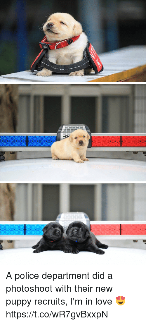 Love, Police, and Puppy: A police department did a photoshoot with their new puppy recruits, I'm in love 😍 https://t.co/wR7gvBxxpN