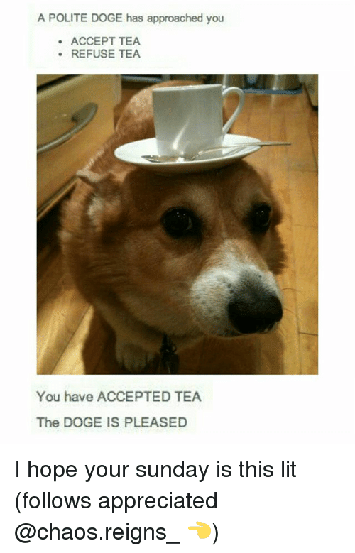 Dogee: A POLITE DOGE has approached you  ACCEPT TEA  REFUSE TEA  You have ACCEPTED TEA  The DOGE IS PLEASED I hope your sunday is this lit (follows appreciated @chaos.reigns_ 👈)
