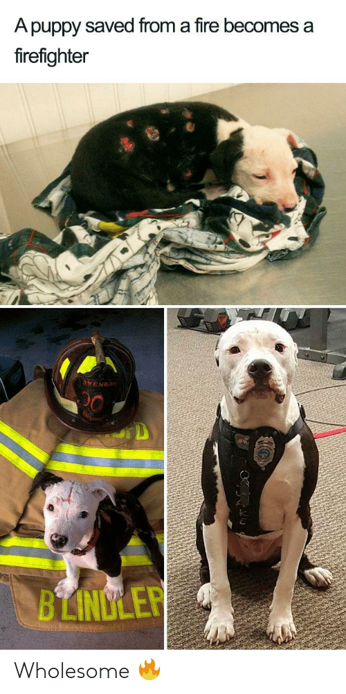 Firefighter: A puppy saved from a fire becomes a  firefighter  AWENDA  BLINDLER Wholesome 🔥