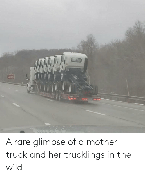 Wild: A rare glimpse of a mother truck and her trucklings in the wild