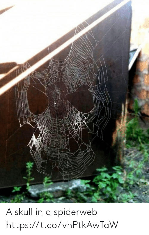 Skull: A skull in a spiderweb https://t.co/vhPtkAwTaW
