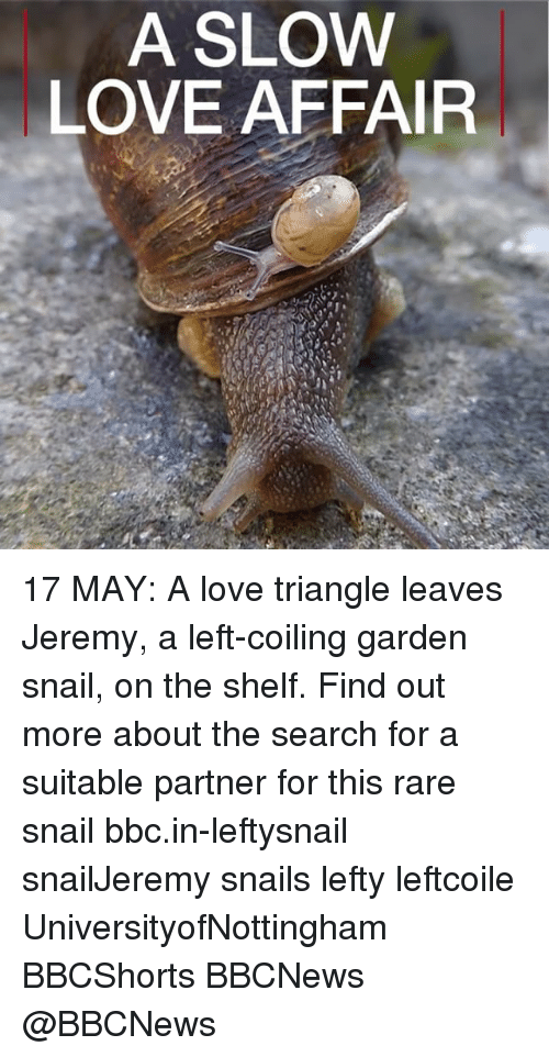 Snailed: A SLOW  LOVE AFFAIR 17 MAY: A love triangle leaves Jeremy, a left-coiling garden snail, on the shelf. Find out more about the search for a suitable partner for this rare snail bbc.in-leftysnail snailJeremy snails lefty leftcoile UniversityofNottingham BBCShorts BBCNews @BBCNews