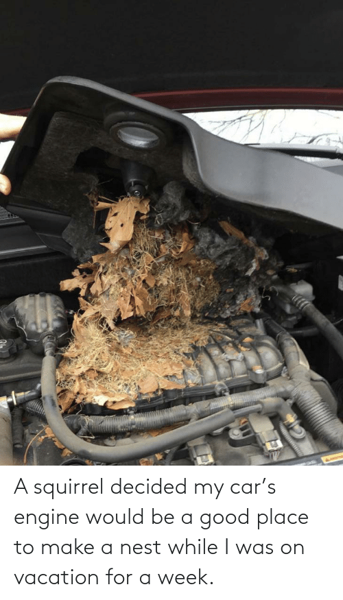 On Vacation: A squirrel decided my car's engine would be a good place to make a nest while I was on vacation for a week.