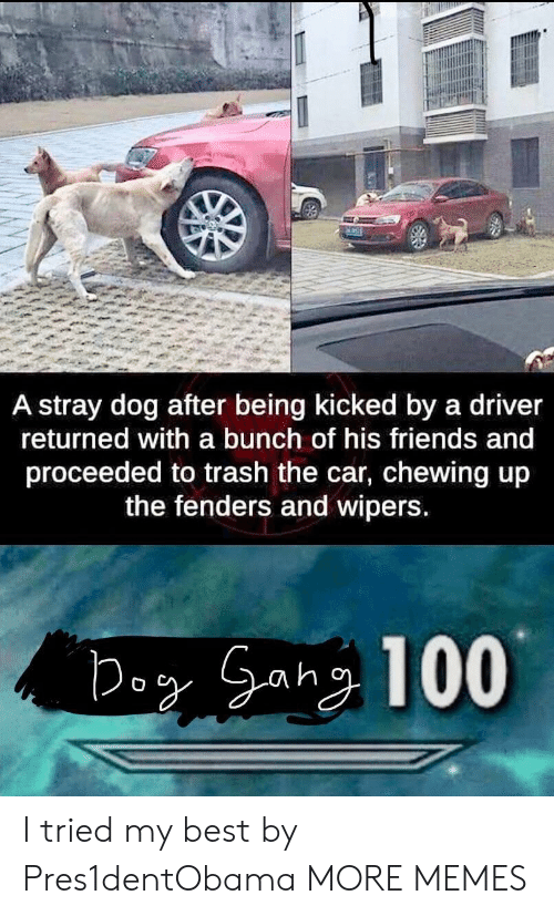 Dank, Friends, and Memes: A stray dog after being kicked by a driver  returned with a bunch of his friends and  proceeded to trash the car, chewing up  the fenders and wipers I tried my best by Pres1dentObama MORE MEMES