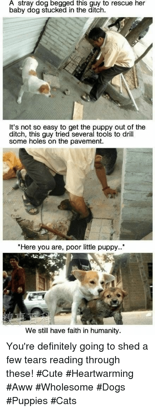 "ditch: A stray dog begged this guy to rescue her  baby dog stucked in the ditch.  It's not so easy to get the puppy out of the  ditch, this guy tried several tools to drill  some holes on the pavement.  ""Here you are, poor little puppy..""  We still have faith in humanity You're definitely going to shed a few tears reading through these! #Cute #Heartwarming #Aww #Wholesome #Dogs #Puppies #Cats"