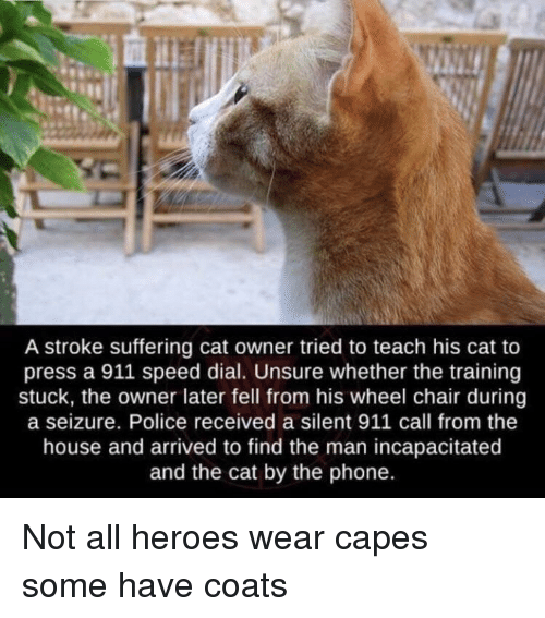 seizure: A stroke suffering cat owner tried to teach his cat to  press a 911 speed dial. Unsure whether the training  stuck, the owner later fell from his wheel chair during  a seizure. Police received a silent 911 call from the  house and arrived to find the man incapacitated  and the cat by the phone. Not all heroes wear capes some have coats