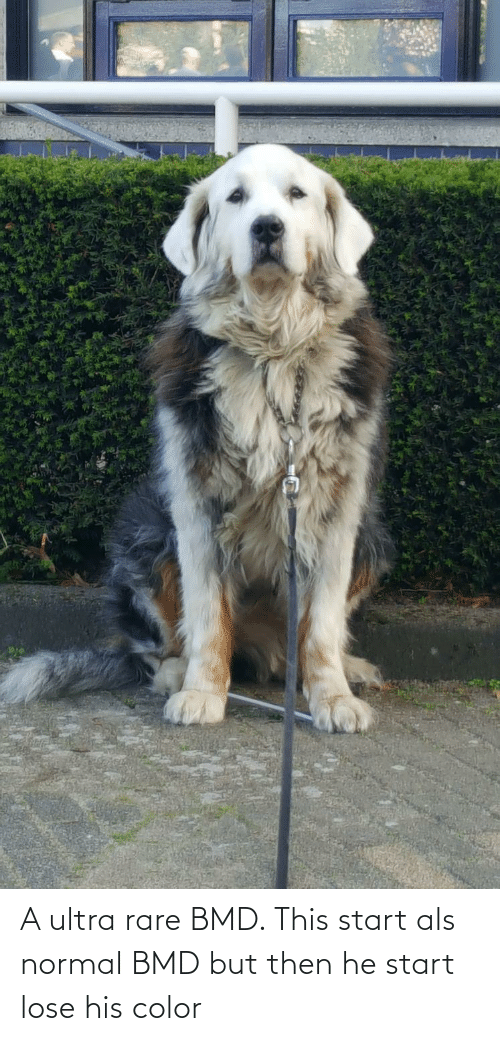 als: A ultra rare BMD. This start als normal BMD but then he start lose his color