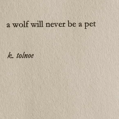 Wolf, Never, and Pet: a wolf will never be  pet  a  k. tolnoe