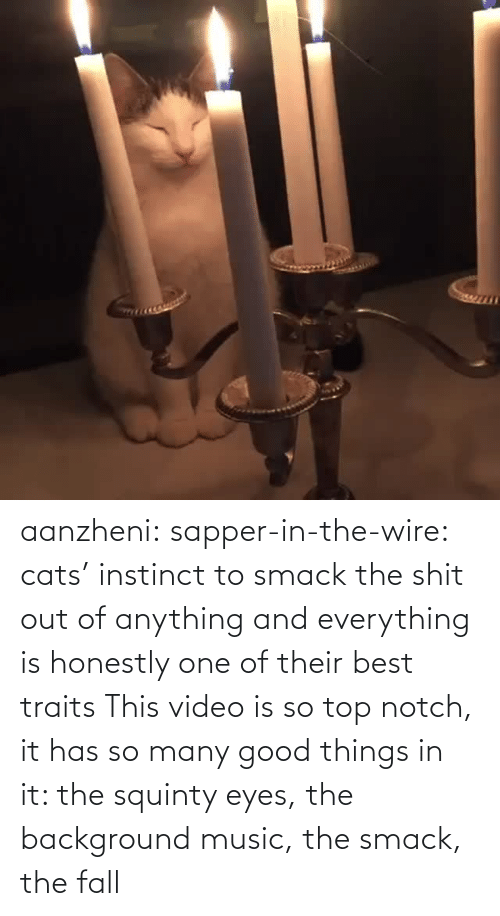 The Shit: aanzheni:  sapper-in-the-wire: cats' instinct to smack the shit out of anything and everything is honestly one of their best traits  This video is so top notch, it has so many good things in it: the squinty eyes, the background music, the smack, the fall