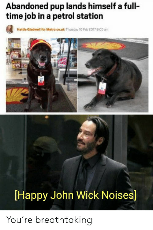 full time job: Abandoned pup lands himself a full-  time job in a petrol station  Hattle Gladwell for Metro.co.uk Thursday 16 Feb 2017 905 am  Happy John Wick Noises] You're breathtaking