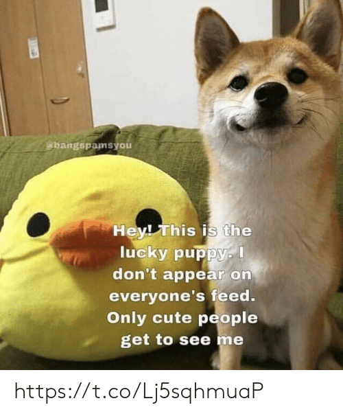 Cute, Memes, and Puppy: abangspamsyou  HevI This is the  lucky puppy.  don't appear on  everyone's feed  Only cute people  get to see me https://t.co/Lj5sqhmuaP