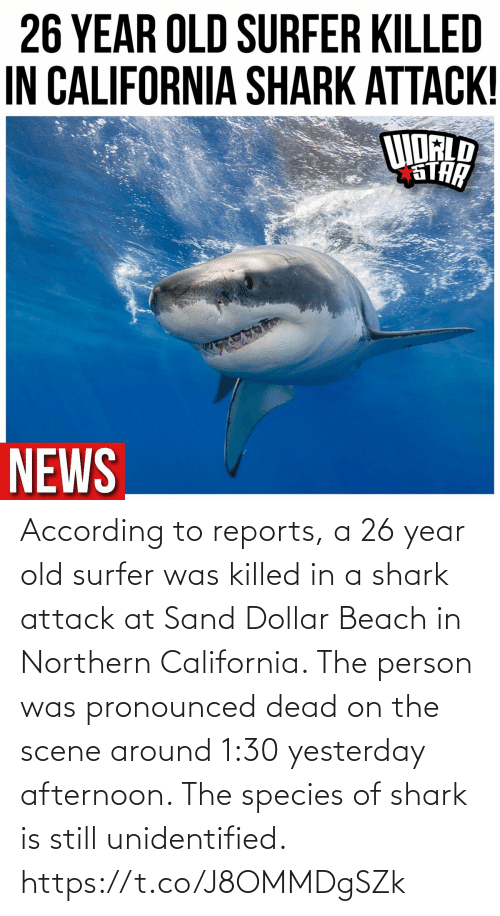 Killed: According to reports, a 26 year old surfer was killed in a shark attack at Sand Dollar Beach in Northern California. The person was pronounced dead on the scene around 1:30 yesterday afternoon. The species of shark is still unidentified. https://t.co/J8OMMDgSZk