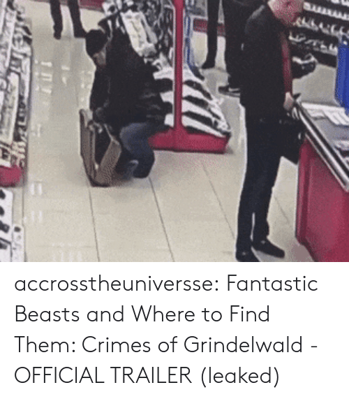 fantastic beasts: accrosstheuniversse:  Fantastic Beasts and Where to Find Them: Crimes of Grindelwald - OFFICIAL TRAILER (leaked)