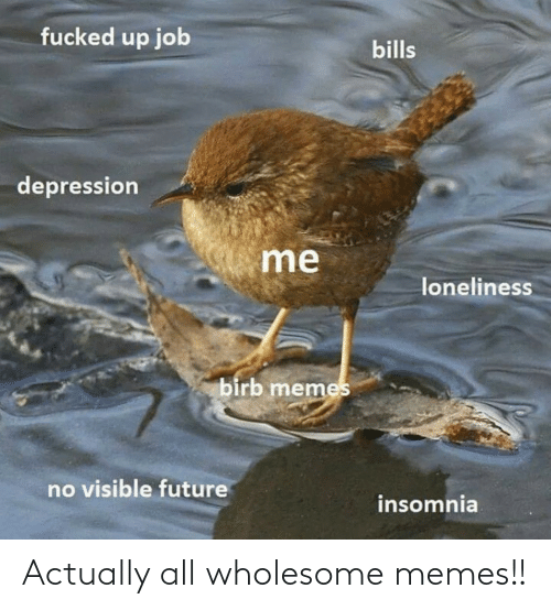 Wholesome: Actually all wholesome memes!!