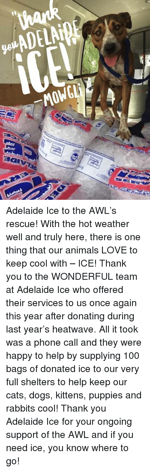 Awl: ADELAiBE  _MOWGLi  제alv73a Adelaide Ice to the AWL's rescue!  With the hot weather well and truly here, there is one thing that our animals LOVE to keep cool with – ICE!  Thank you to the WONDERFUL team at Adelaide Ice who offered their services to us once again this year after donating during last year's heatwave.  All it took was a phone call and they were happy to help by supplying 100 bags of donated ice to our very full shelters to help keep our cats, dogs, kittens, puppies and rabbits cool!  Thank you Adelaide Ice for your ongoing support of the AWL and if you need ice, you know where to go!