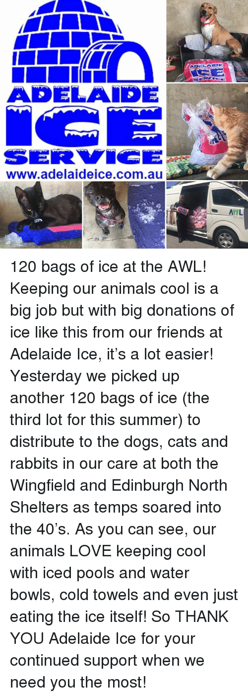 Awl: ADELAIDE  www.adelaideice.com.au  AHL 120 bags of ice at the AWL!  Keeping our animals cool is a big job but with big donations of ice like this from our friends at Adelaide Ice, it's a lot easier!  Yesterday we picked up another 120 bags of ice (the third lot for this summer) to distribute to the dogs, cats and rabbits in our care at both the Wingfield and Edinburgh North Shelters as temps soared into the 40's.  As you can see, our animals LOVE keeping cool with iced pools and water bowls, cold towels and even just eating the ice itself!  So THANK YOU Adelaide Ice for your continued support when we need you the most!