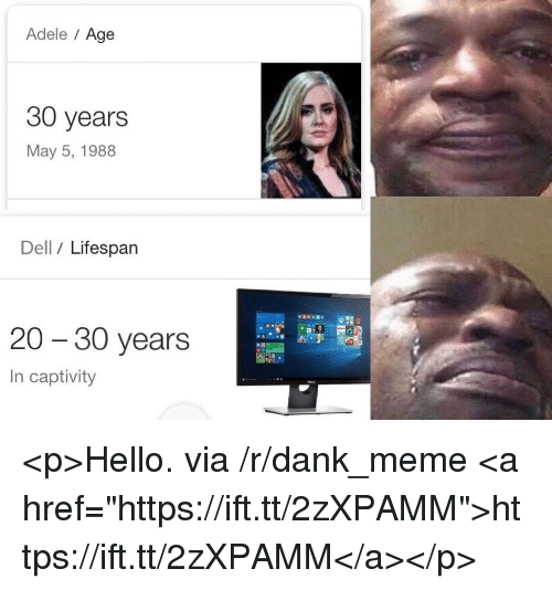 """Adele, Dank, and Dell: Adele Age  30 years  May 5, 1988  Dell / Lifespan  20 - 30 years  In captivity <p>Hello. via /r/dank_meme <a href=""""https://ift.tt/2zXPAMM"""">https://ift.tt/2zXPAMM</a></p>"""