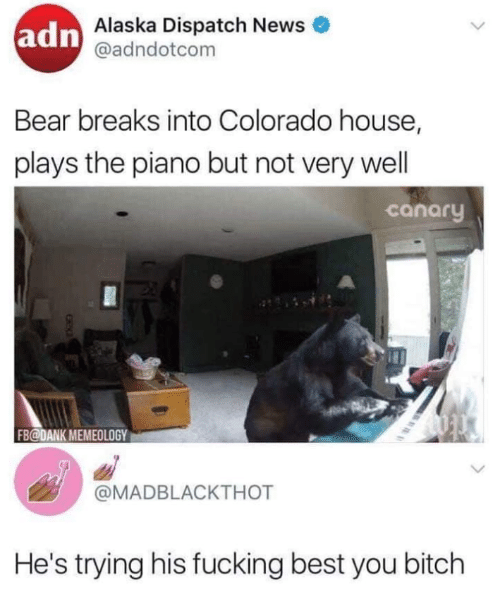 Alaska: adn  Alaska Dispatch News  @adndotcom  Bear breaks into Colorado house,  plays the piano but not very wel  canary  FB@DANK MEMEOLOGY  @MADBLACKTHOT  He's trying his fucking best you bitch