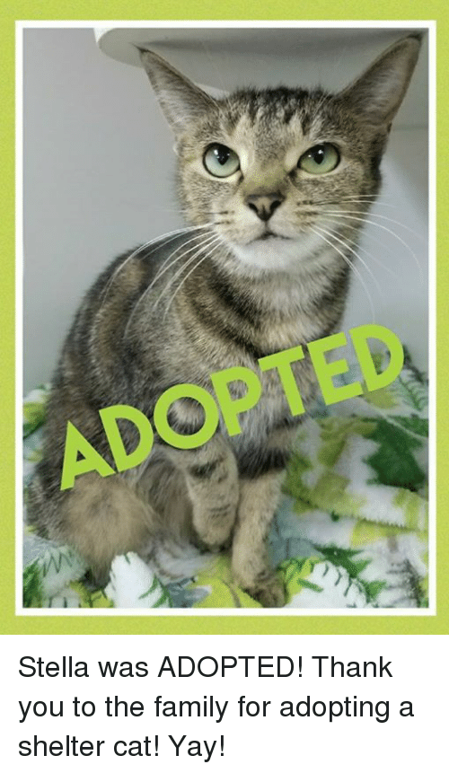 Ado Stella Was Adopted Thank You To The Family For Adopting A Shelter Cat Yay Family Meme On Esmemes Com These thank you memes are something that will make you laugh. esmemes com