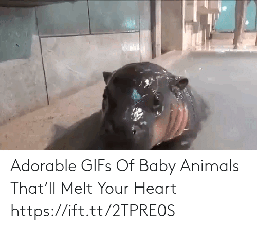 Baby Animals: Adorable GIFs Of Baby Animals That'll Melt Your Heart https://ift.tt/2TPRE0S