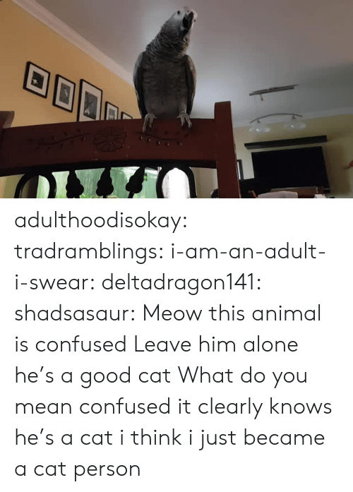 Cat Person: adulthoodisokay: tradramblings:  i-am-an-adult-i-swear:  deltadragon141:  shadsasaur: Meow  this animal is confused   Leave him alone he's a good cat   What do you mean confused it clearly knows he's a cat  i think i just became a cat person