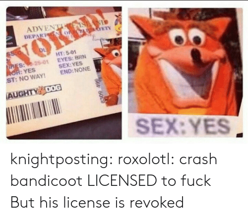 Crash Bandicoot, Sex, and Tumblr: ADVEN  DEPAKNS  ETN  HT: 5-01  SEX:YES  END: NONE  s:98-25-01 EYES: BRN  :YES  : NO WAY  ST  AUGHTY 00G  SEX: YES knightposting:  roxolotl: crash bandicoot LICENSED to fuck  But his license is revoked