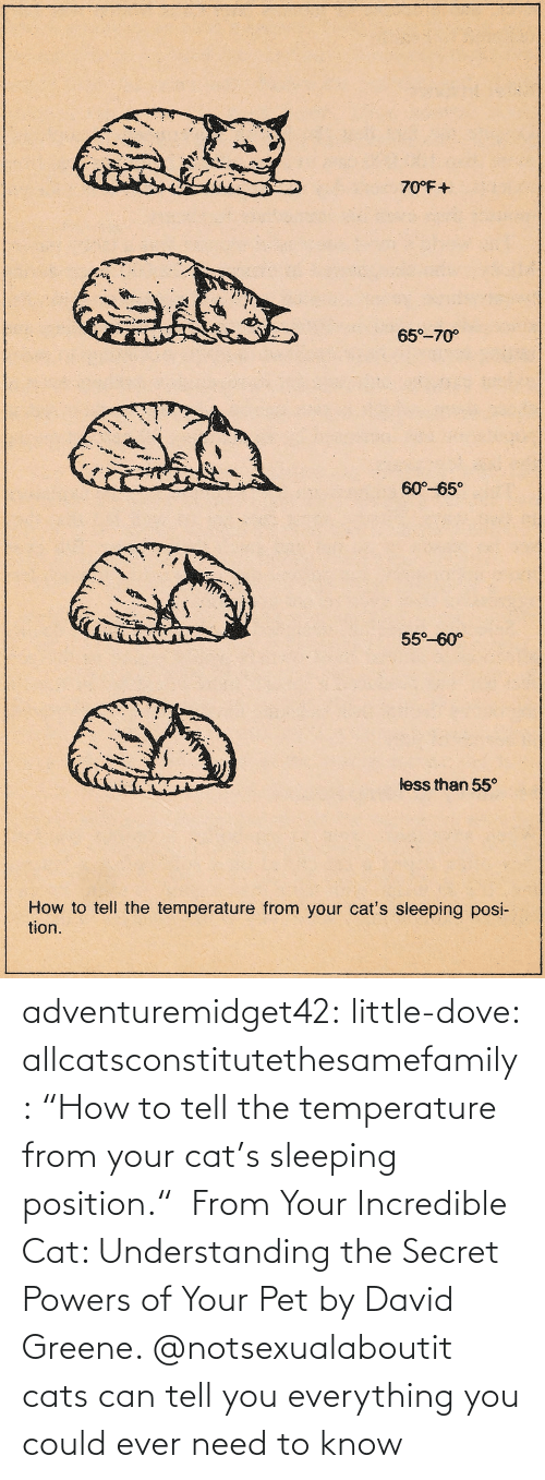 "David: adventuremidget42:  little-dove:  allcatsconstitutethesamefamily: ""How to tell the temperature from your cat's sleeping position.""  From Your Incredible Cat: Understanding the Secret Powers of Your Pet by David Greene.    @notsexualaboutit   cats can tell you everything you could ever need to know"