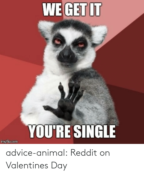 Advice Animal: advice-animal:  Reddit on Valentines Day