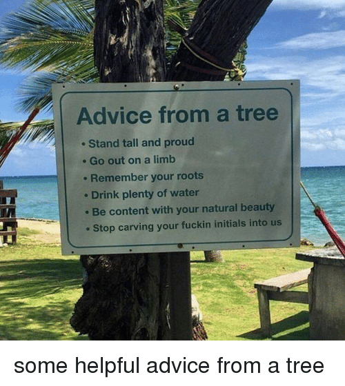 Advice, Tree, and Water: Advice from a tree  . Stand tall and proud  . Go out on a limb  . Remember your roots  e Drink plenty of water  Be content with your natural beauty  Stop carving your fuckin initials into us some helpful advice from a tree