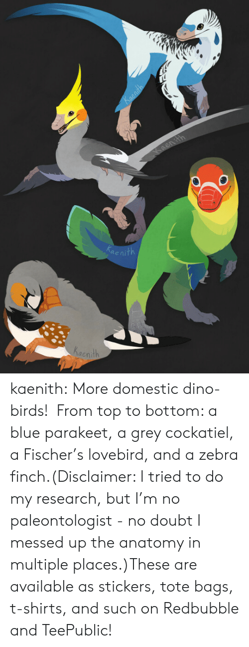 lovebird: ae  Kaenith kaenith:  More domestic dino-birds!  From top to bottom: a blue parakeet, a grey cockatiel, a Fischer's lovebird, and a zebra finch.(Disclaimer: I tried to do my research, but I'm no paleontologist - no doubt I messed up the anatomy in multiple places.)These are available as stickers, tote bags, t-shirts, and such on Redbubble and TeePublic!