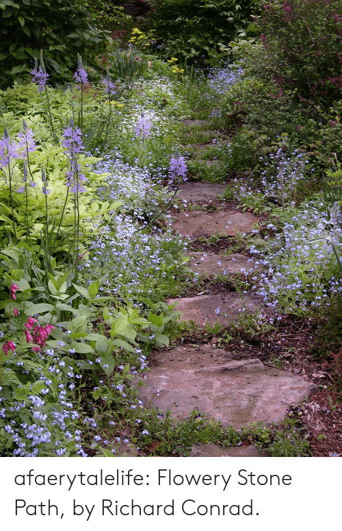 Tumblr, Blog, and Flickr: afaerytalelife: Flowery Stone Path, by Richard Conrad.