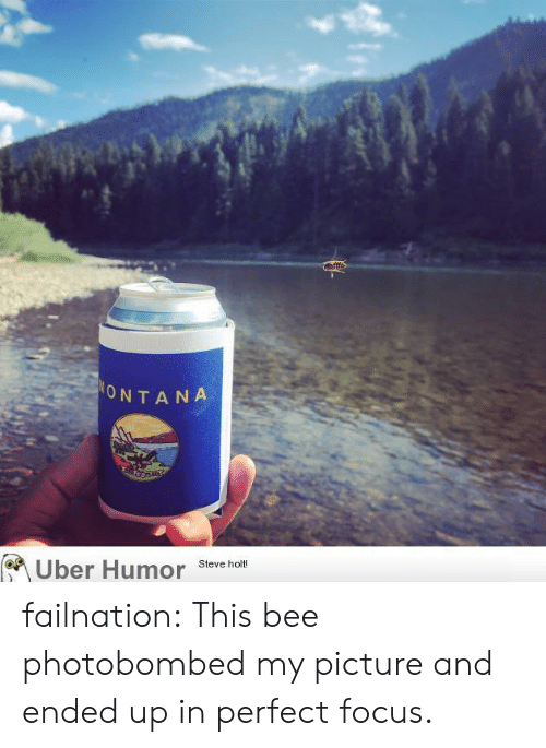 Tumblr, Uber, and Blog: afffs  ONTANA  Uber Humor  Steve holt! failnation:  This bee photobombed my picture and ended up in perfect focus.