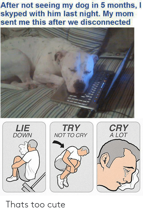 last night: After not seeing my dog in 5 months, I  skyped with him last night. My mom  sent me this after we disconnected  TRY  CRY  A LOT  LIE  DOWN  NOT TO CRY Thats too cute