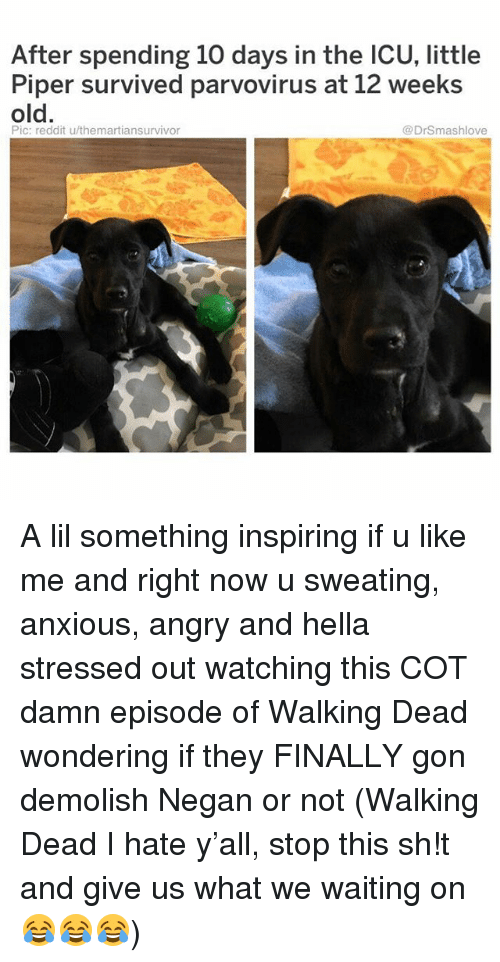 negan: After spending 10 days in the ICU, little  Piper survived parvovirus at 12 weeks  old.  Pic: reddit u/themartiansurvivor  @DrSmashlove A lil something inspiring if u like me and right now u sweating, anxious, angry and hella stressed out watching this COT damn episode of Walking Dead wondering if they FINALLY gon demolish Negan or not (Walking Dead I hate y'all, stop this sh!t and give us what we waiting on 😂😂😂)